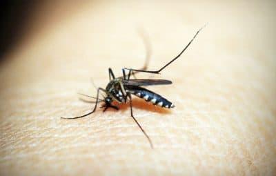 Se débarrasser des insectes en camping