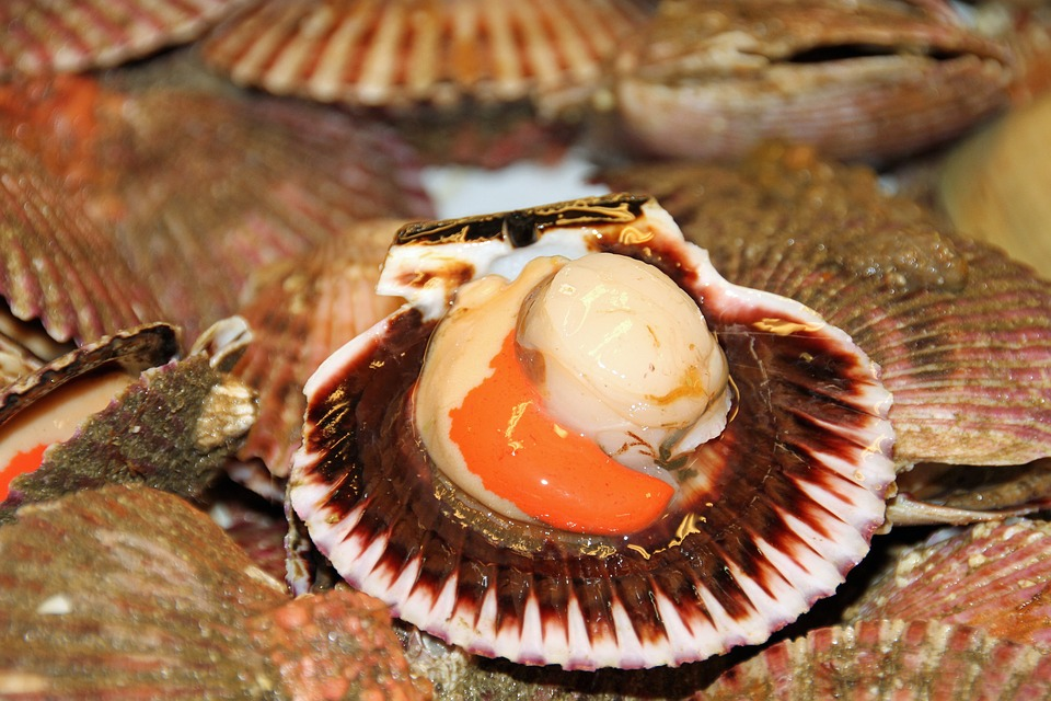 Quelle est la technique phare de la pêche au coquillages ?